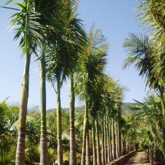 Central Coast Palms - Wayne and Lynn Barker linkedin profile