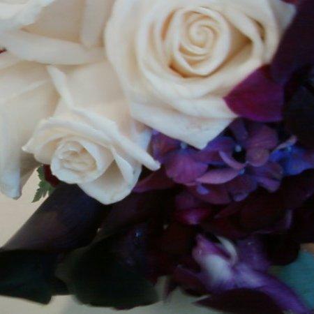 Mary Celeste Bush linkedin profile